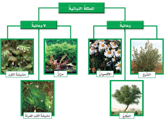 تعرف على تصنيف النباتات الزهرية 5th%20grade%20oloom%20ksa%20unit-1-1%20plants%20kingdom